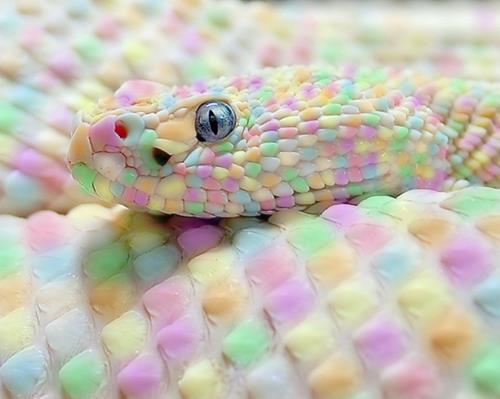 serpiente de algodon de azucar